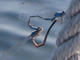 Dragonfly love image